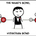 the names bond hydrogen bond