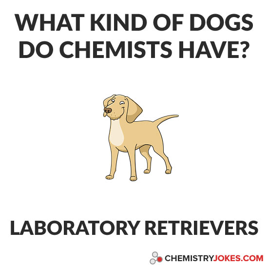 What Kind Of Dogs Do Chemists Have?